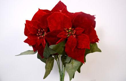 Slika Buket božićnih zvijezda 50 cm