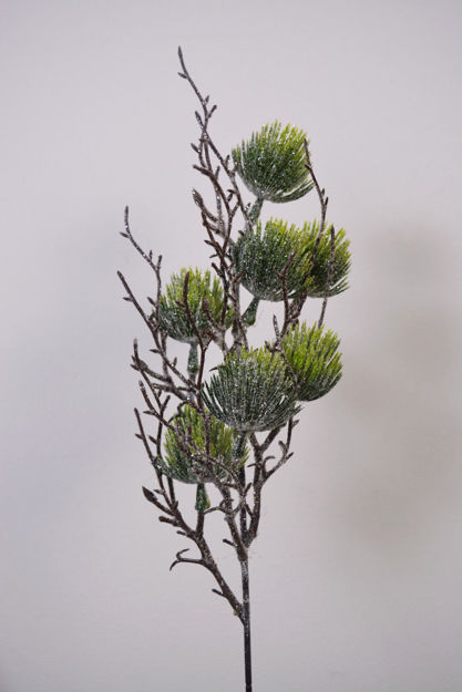 Slika Grana bora 50 cm