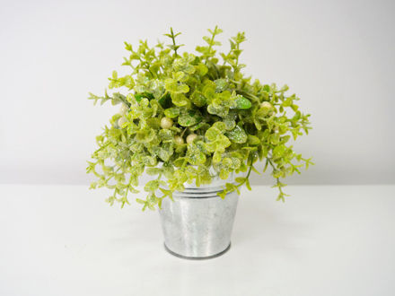 Zelenilo u posudi 21 cm