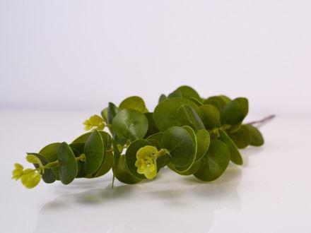 Slika Grana eukaliptus 77 cm
