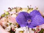Flower box - mix cvijeće 03