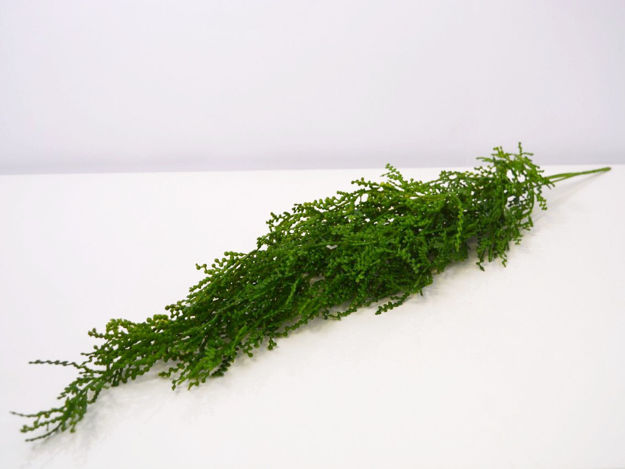 Slika Grana zelenila 73 cm