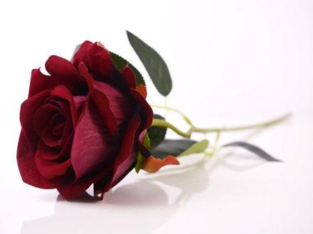 umjetna ruža bordo