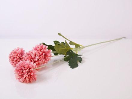 krizantema grana roza