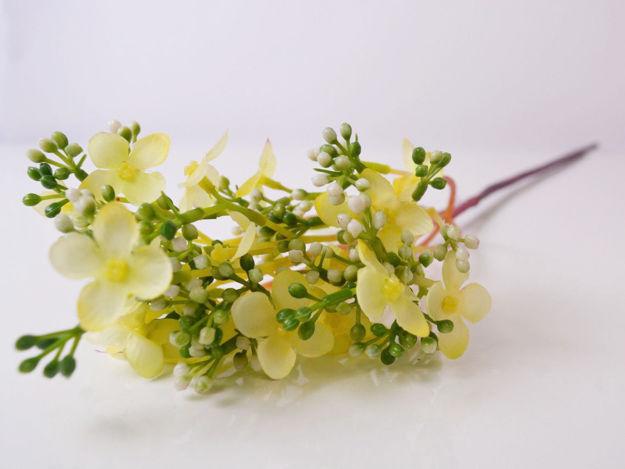 Sedum žutih cvjetova