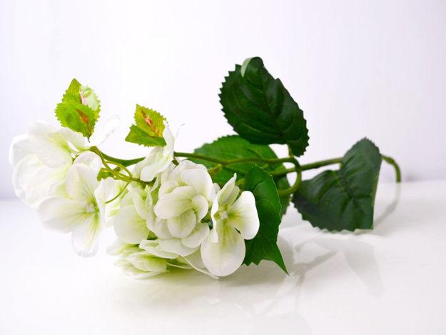 Slika Hortenzija 71 cm