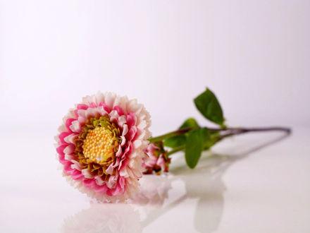 Slika Cvijet 47 cm
