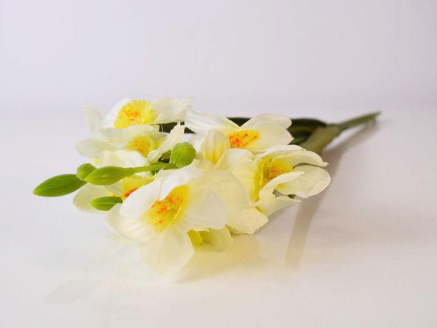 Slika Narcis 40 cm