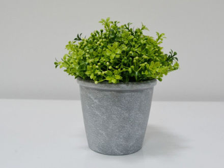 Cvijeće u posudi 20 cm 01