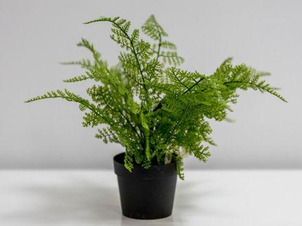 Zelenilo u posudi 25 cm