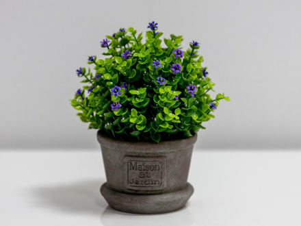 Cvijeće u posudi 20 cm