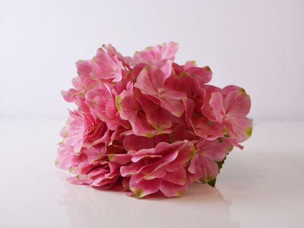 Slika Hortenzija 45 cm