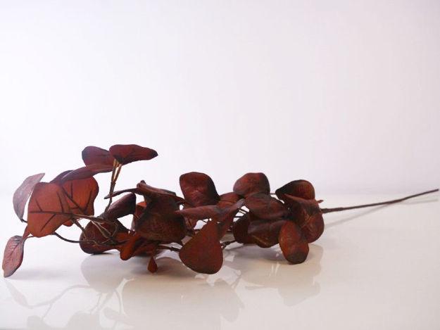 Slika Grana eukaliptusa 71 cm