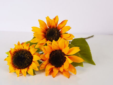 Slika Suncokret 48 cm
