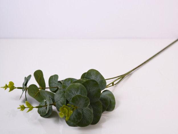 Slika Eukaliptus 64 cm