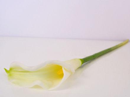 Slika Kala 65  cm